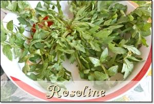 Rosoline