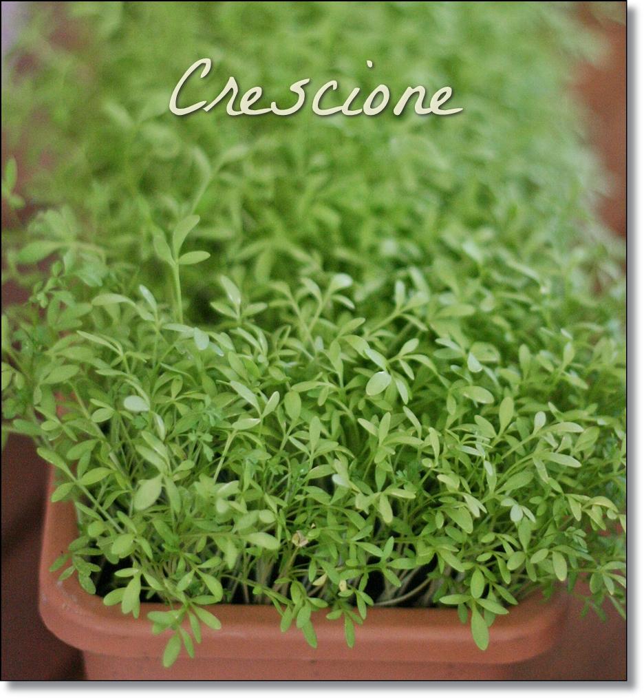 La cucina con le erbe spontanee crumpets co - Crescione ricette cucina ...