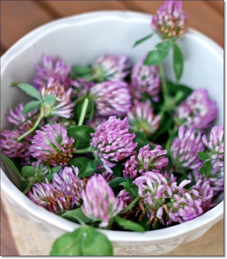 La cucina con i fiori crumpets co for Fiori con la l