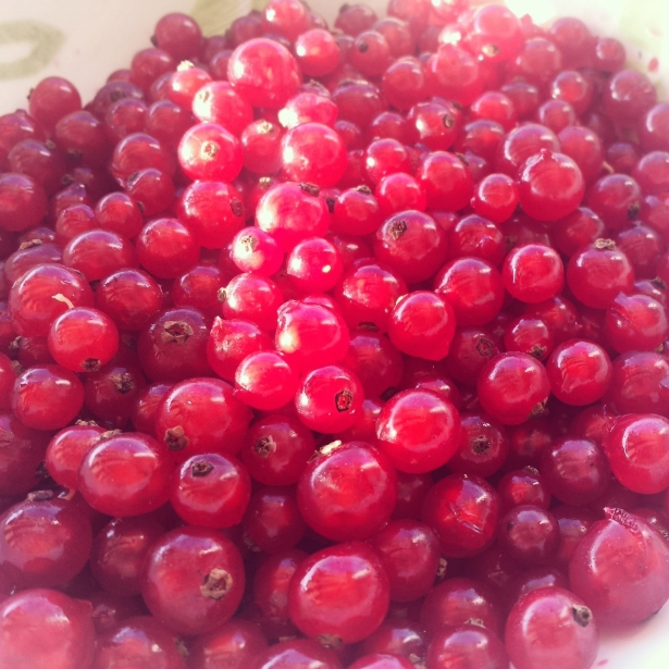 Ribes rossi - sgranati